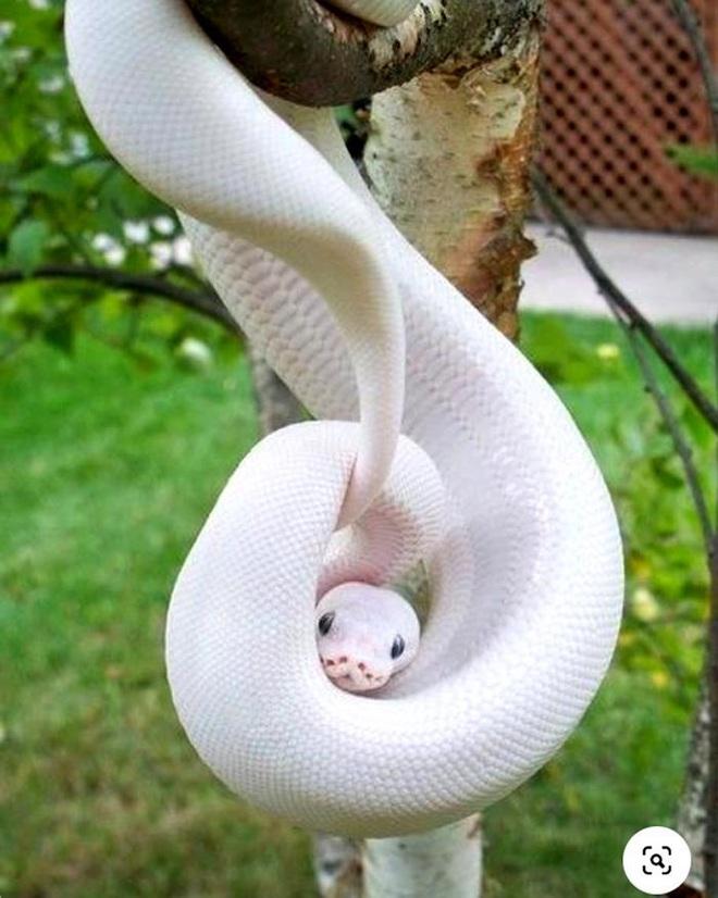 Vẻ đẹp kỳ dị của những động vật bạch tạng trong tự nhiên - Ảnh 7.