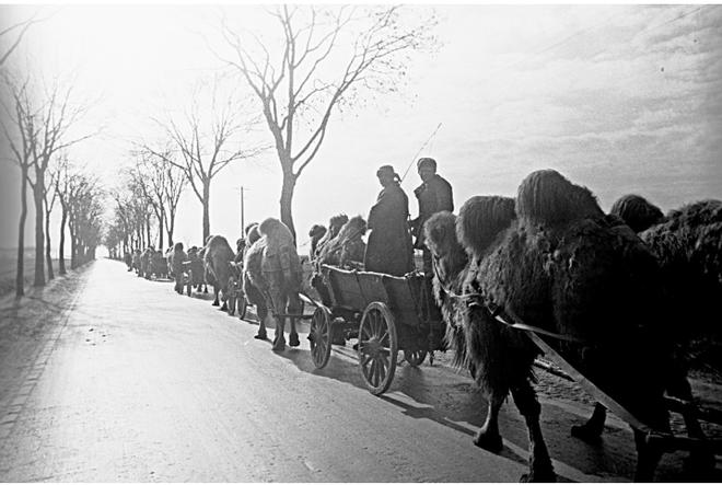 Kỷ niệm 75 năm ngày chiến thắng Chủ nghĩa Phát xít: Chuyện chưa kể về những đơn vị đặc biệt chống phát xít - Ảnh 1.
