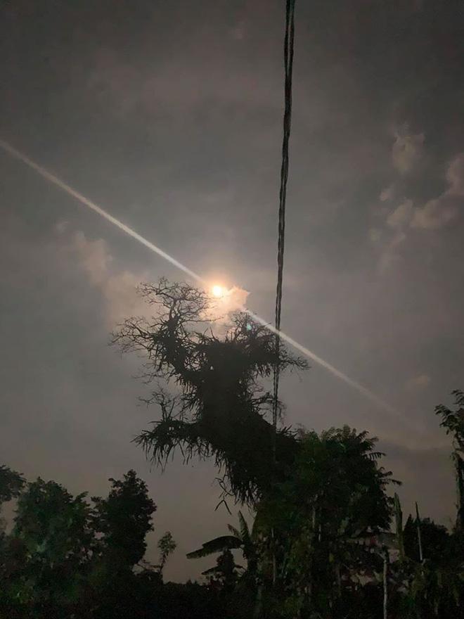 Cây thanh long cổ thụ ma mị dưới ánh trăng khiến dân mạng bất ngờ, hình ảnh ban ngày còn gây thích thú hơn - Ảnh 1.