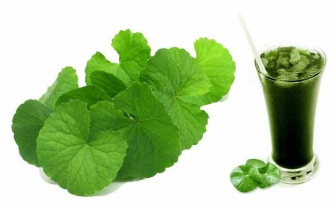 Một số tác dụng của rau má đối với sức khỏe - Ảnh 2.