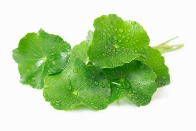 Một số tác dụng của rau má đối với sức khỏe - Ảnh 7.