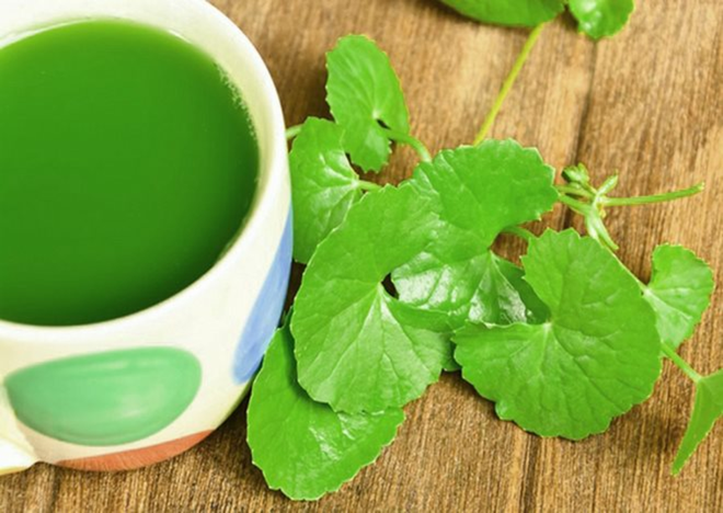 Một số tác dụng của rau má đối với sức khỏe - Ảnh 8.