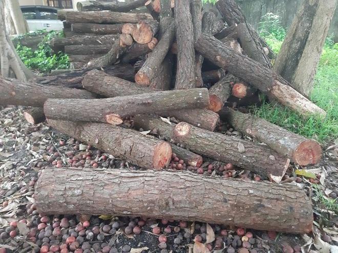 Nằm sát trụ sở Ủy ban xã nhưng rừng phòng hộ vẫn bị chặt phá tan hoang - Ảnh 4.