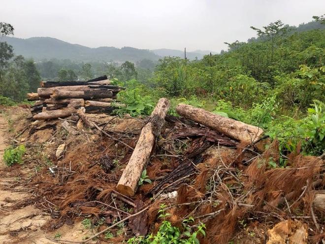Nằm sát trụ sở Ủy ban xã nhưng rừng phòng hộ vẫn bị chặt phá tan hoang - Ảnh 3.