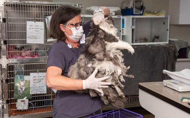 Được gọi đi giải cứu động vật, tới nơi người phụ nữ hoang mang không biết đây là con gì