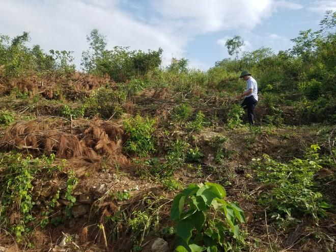 Nằm sát trụ sở Ủy ban xã nhưng rừng phòng hộ vẫn bị chặt phá tan hoang - Ảnh 1.