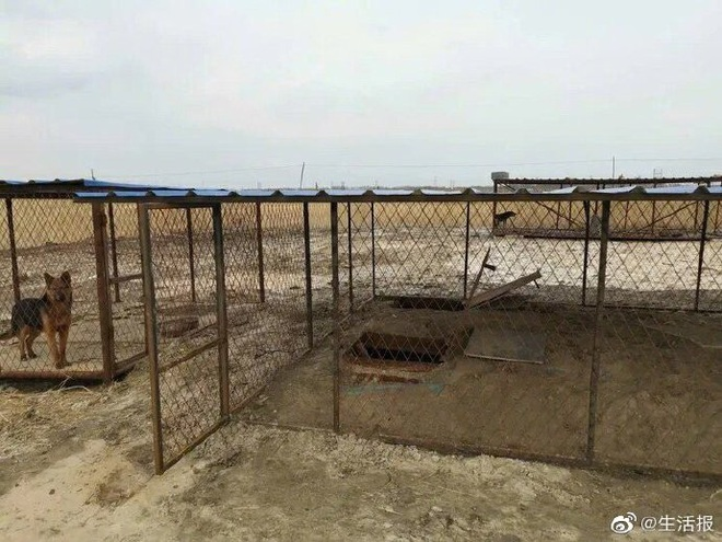 Chiêu ẩn thân độc đáo của dân đào bitcoin trộm ở Trung Quốc: Chui dưới mộ, trốn trong chuồng chó... - Ảnh 2.