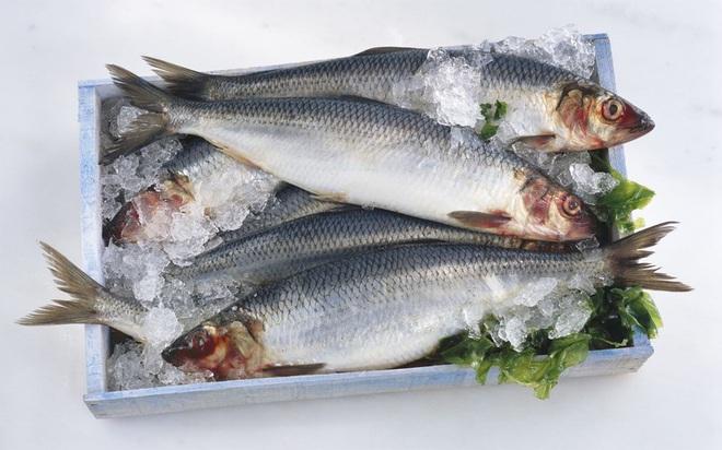 Những loại cá cực tốt cho sức khỏe - Ảnh 1.