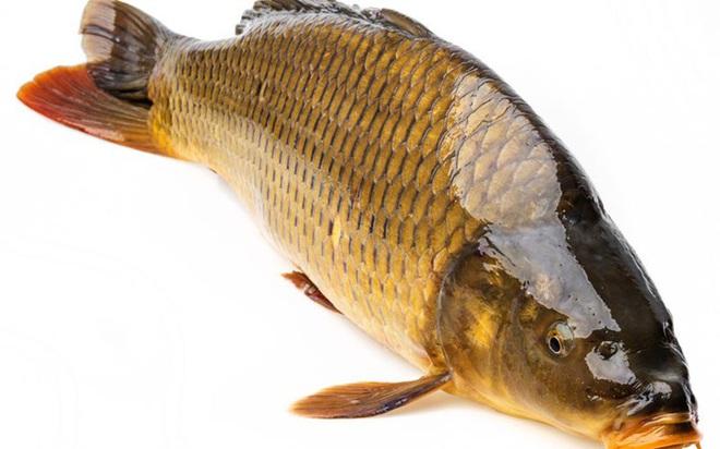 Những loại cá cực tốt cho sức khỏe - Ảnh 14.