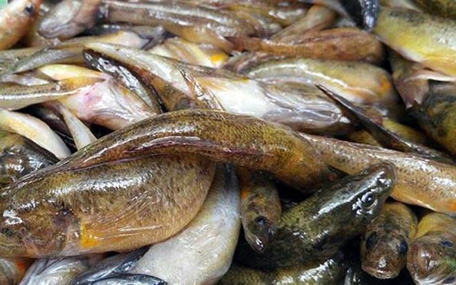 Những loại cá cực tốt cho sức khỏe - Ảnh 15.