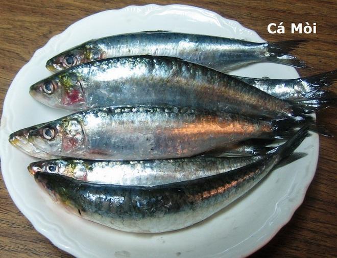 Những loại cá cực tốt cho sức khỏe - Ảnh 5.