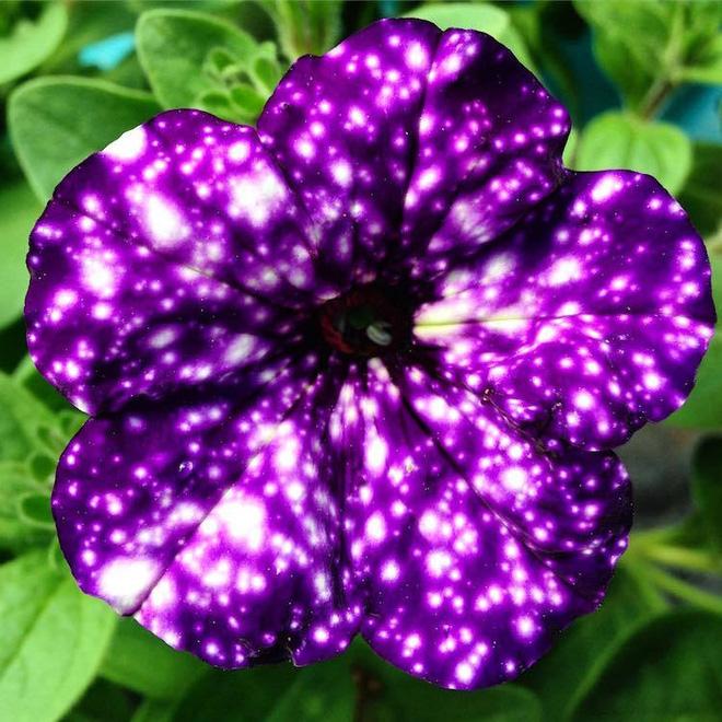 Ngỡ ngàng loài hoa lạ khi nở giống hệt cây kem, nhìn là muốn ăn - Ảnh 6.