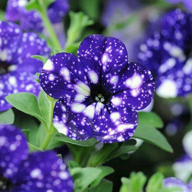 Ngỡ ngàng loài hoa lạ khi nở giống hệt cây kem, nhìn là muốn ăn - Ảnh 7.