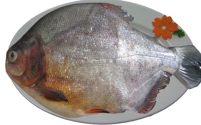 Những loại cá cực tốt cho sức khỏe - Ảnh 9.