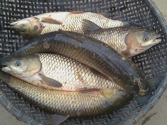 Những loại cá cực tốt cho sức khỏe - Ảnh 10.