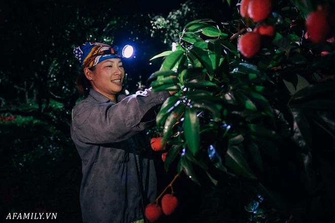 """Lần đầu vào tận vườn vải xem cảnh người nông dân soi đèn pin đi thu hoạch khi trời còn tối mịt vì """"sợ vải chết ngộp"""" - ảnh 3"""