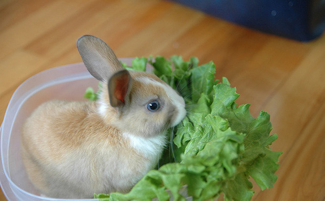 Món ăn thuốc từ thỏ tốt cho người suy nhược