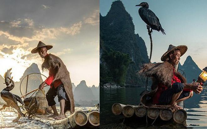 Loạt hình ảnh lão ngư bắt cá bằng chim cốc độc đáo khó rời mắt trong khung cảnh đẹp như tranh thủy mặc