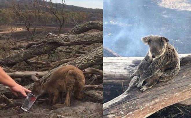 """Choáng váng: WWF dự đoán hơn MỘT TỈ sinh vật có thể đã chết vì vụ cháy rừng """"đại thảm họa"""" của Úc, và đó chưa phải con số cuối cùng"""