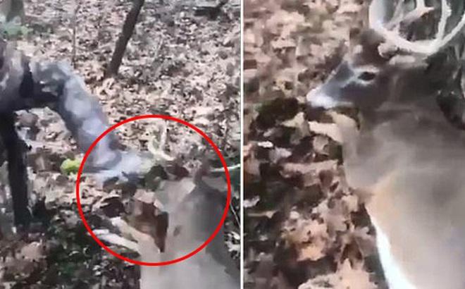 Hai thanh niên hành hạ con hươu bị thương cho đến chết khiến 700.000 cư dân mạng phẫn nộ kí tên đòi bỏ tù