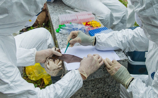Giới chuyên gia: Trung Quốc không cố tình hoặc vô tình thả coronavirus mới