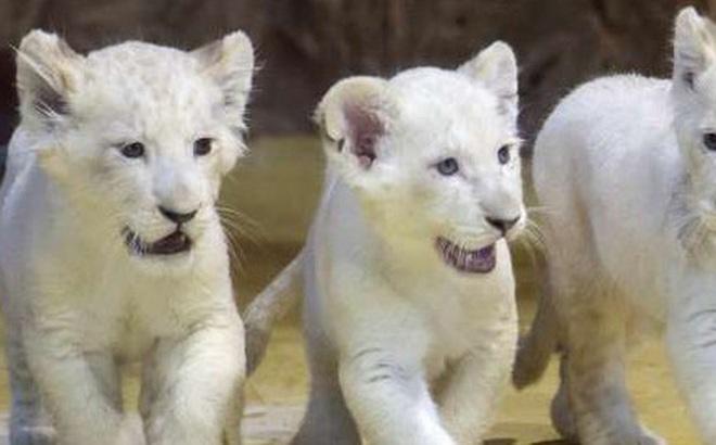 """Hình ảnh đáng yêu của những """"đứa trẻ"""" trong sở thú"""
