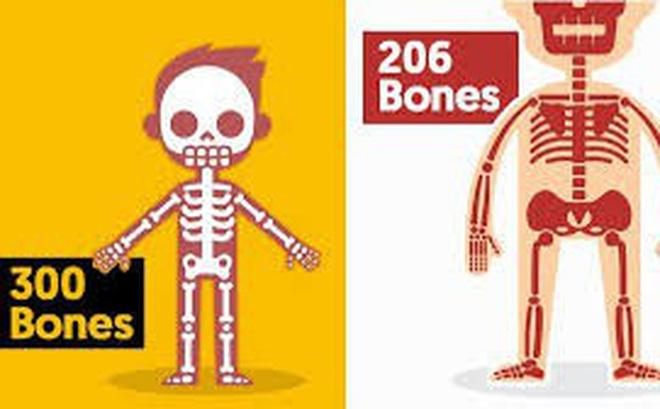1001 thắc mắc: Kỳ lạ vì sao em bé lắm xương hơn người lớn?