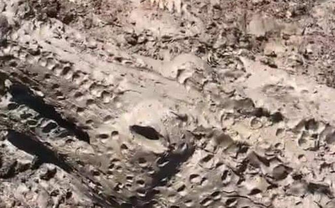 Anh chàng co giò bỏ chạy khi nhìn thấy cá sấu tắm bùn nhưng cái kết mới khiến ai nấy đều bất ngờ