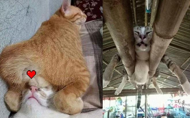 """12 bằng chứng cho thấy mèo là lũ """"tự nhiên như ruồi"""", bạ đâu cũng lăn ra ngủ được!"""