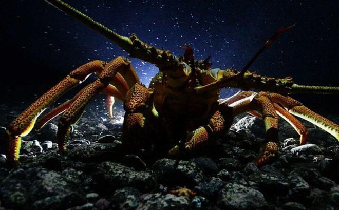 7 loài sinh vật bất tử, sở hữu skill 'cải lão hoàn đồng' đang tồn tại trên Trái Đất