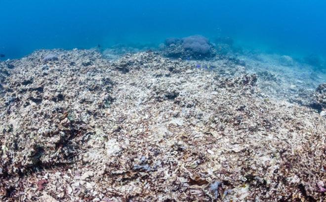 Nghiên cứu: Biển đổi khí hậu làm thay đổi độ pH của biển, quay trở về mức như 14 triệu năm trước