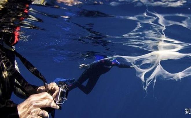 Làm thế nào để cá voi có thể sống và cho con bú được ở dưới đại dương?