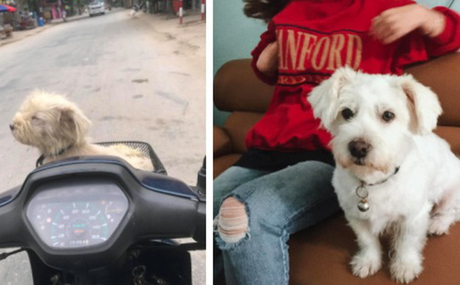 Câu chuyện chú chó đi lạc sau 1 năm và hành trình bất ngờ đoàn tụ với chủ cũ khi được giải cứu ở hàng thịt chó mèo khiến dân mạng vô cùng xúc động