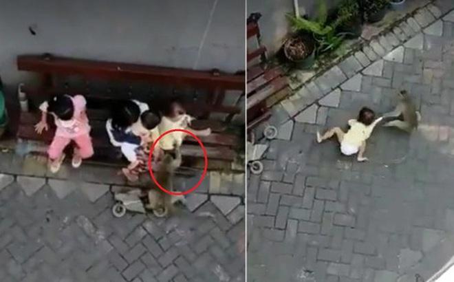 """Chú khỉ ngang nhiên """"bắt cóc"""" đứa trẻ đang ở bên cạnh người lớn rồi kéo lê dưới đất nhưng đằng sau là một câu chuyện đau lòng"""