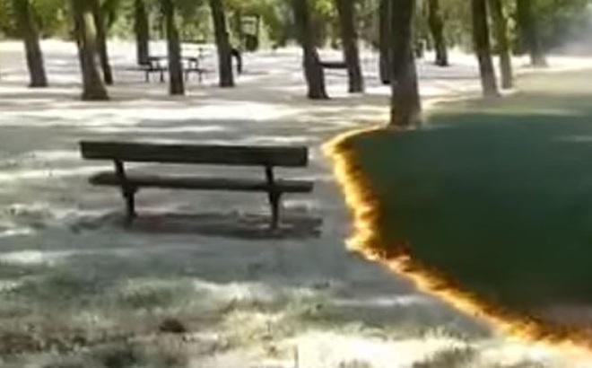 Thảm lửa quét qua công viên nhưng cỏ cây không bị ảnh hưởng