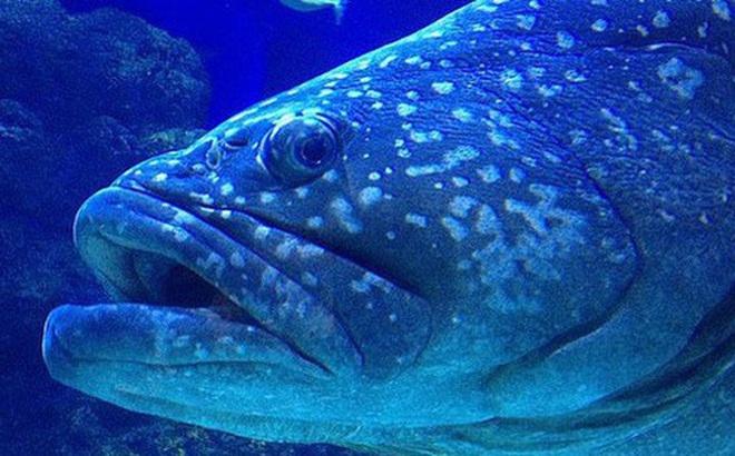 Vắng bóng con người, đàn cá ở thủy cung Queensland bỏ ăn vì cô đơn