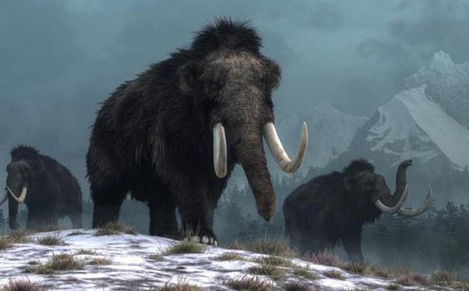 Phát hiện cấu trúc khổng lồ được làm từ xương voi ma mút 25.000 năm trước
