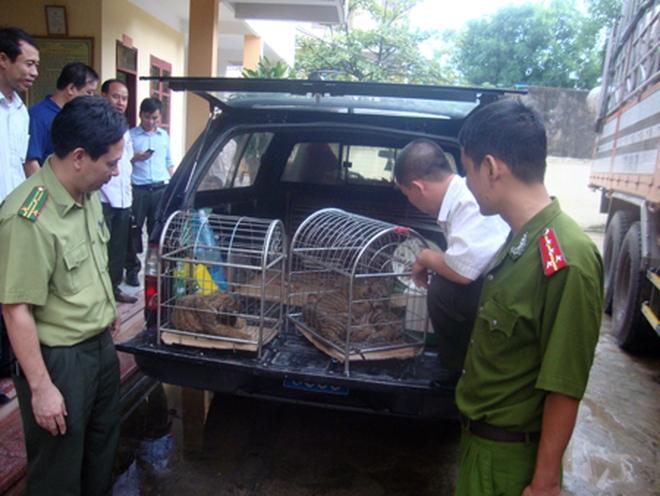 """Bàn giao 4 """"chúa tể rừng xanh"""" cho trung tâm cứu hộ động vật hoang dã"""
