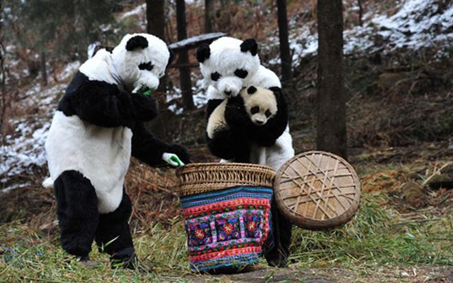 'Gấu trúc biết nói' tại Trung Quốc