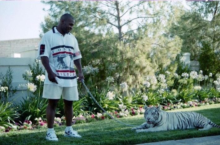 Thú chơi ngông thích nuôi hổ của Mike Tyson và giai thoại mất oan 6 tỷ đồng vì để vật nuôi ăn thịt người - Ảnh 1.