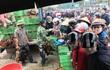 Người dân Hà Nội xếp hàng 'rồng rắn' giải cứu gà đồi Chí Linh