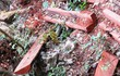 Rừng Di sản bị phá: Đồn trưởng Biên phòng buộc thôi chức, 6 sĩ quan khác bị kỷ luật