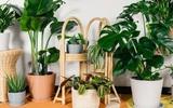 5 lưu ý về phong thủy khi trồng cây cảnh trong nhà, giải trừ vận xui, lộc tài tăng tiến