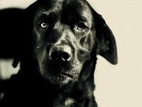 """Khi các nhân vật phim """"Chúa Nhẫn"""" hóa thân thành... chó"""