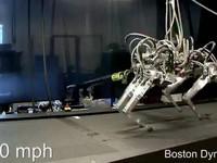 Nhện robot hoạt động như thật