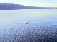 Những bí mật khó tin về quái vật Loch Ness