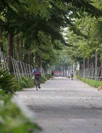 [NÓNG] Bắt Tổng giám đốc Cty Công viên cây xanh Hà Nội và 6 đồng phạm trong vụ trồng 1 triệu cây xanh
