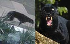 Nhìn qua camera an ninh, người phụ nữ sốc khi thấy 1 con vật màu đen to lù lù đi qua nhà