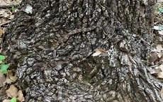 Gốc cây 'có độc': Có 4 'hung thần' trong bức ảnh này, bạn có nhìn ra trong 5 giây?
