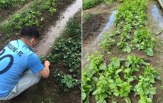 """Hàng xóm cho mượn đất, cặp đôi trồng cả """"một gia tài lớn"""" ở Nhật Bản: Tên từng loại khiến người ta phải ghen tỵ"""